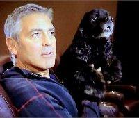 George Clooney с собакой